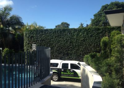 Hedge-trimming (2)